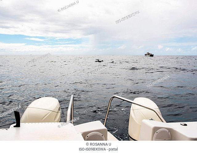 Motorboat in sea, Na Pali Coast, Kauai, Hawaii