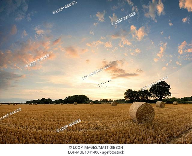 A summer sunset over a field of hay bales