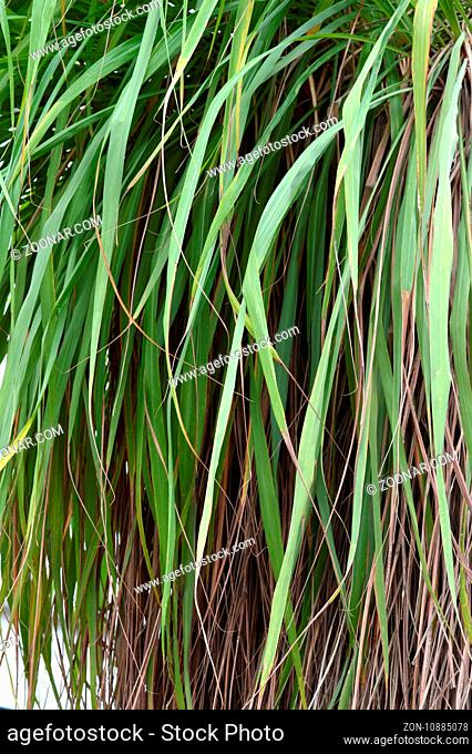 detailed texture weed grass