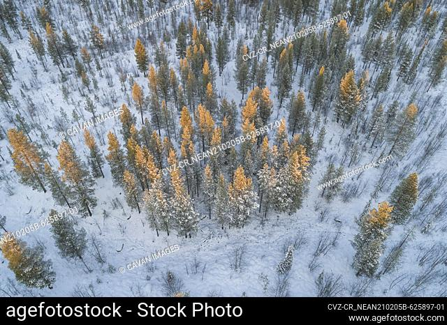 snow covered nordic pine forest from aerial point of view