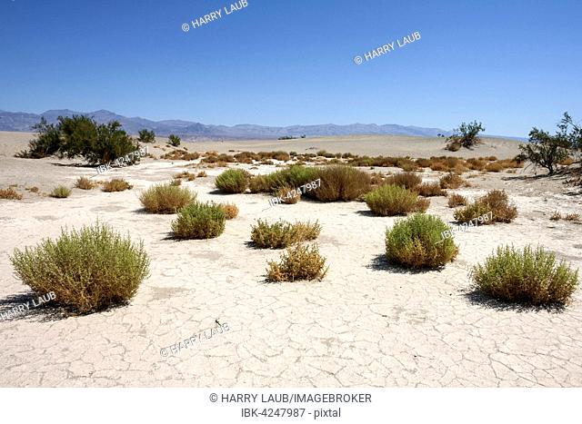 Mesquite Flat Sand Dunes, Death Valley National Park, Mojave Desert, California, USA