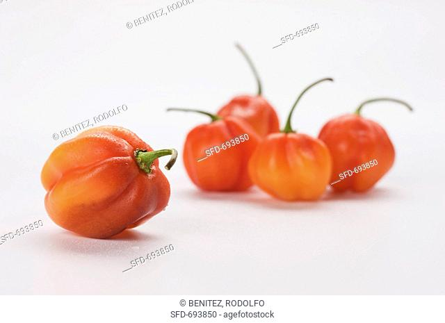 Sweet Chilies on a White Background