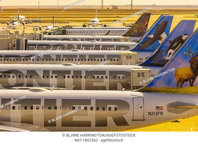 Frontier Airlines jets lined up at gates on Concourse A at Denver International Airport, Denver, Colorado USA