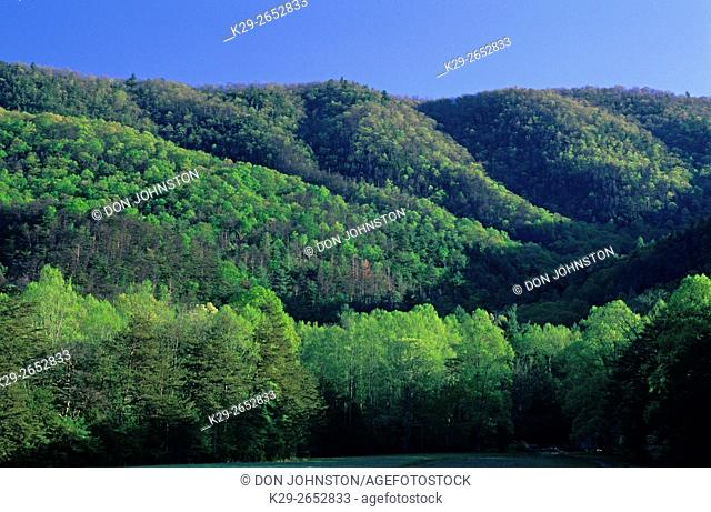 Fresh foliage on mountain slopes at Cades Cove, Great Smoky Mountains National Park, Tennessee, USA