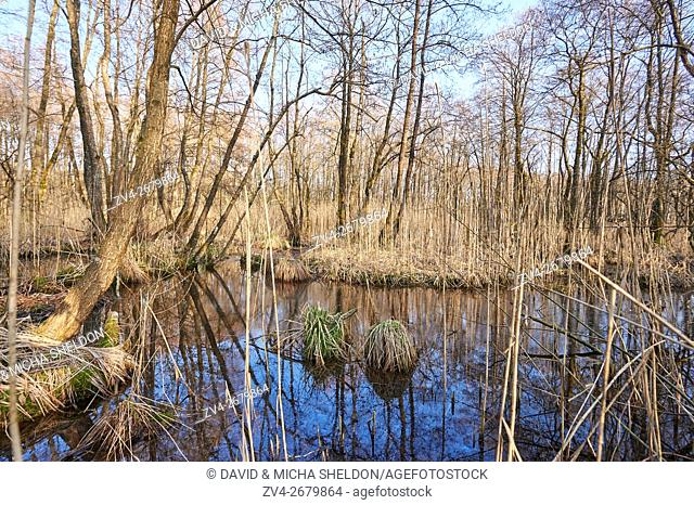 Landscape of a swamp on a sunny day in spring