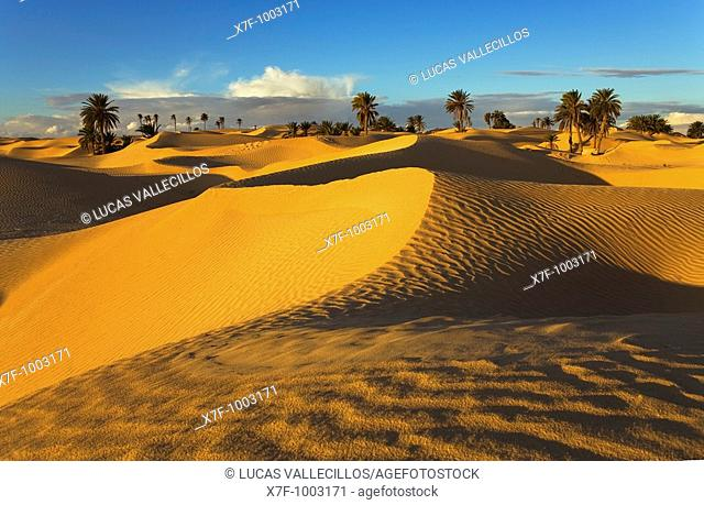 Tunisia Zaafrane Douz Desert