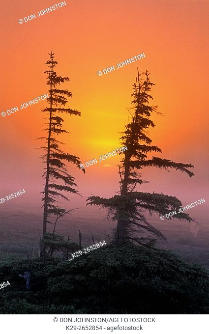 Rising sun over boreal landscape, Churchill, MB, Canada