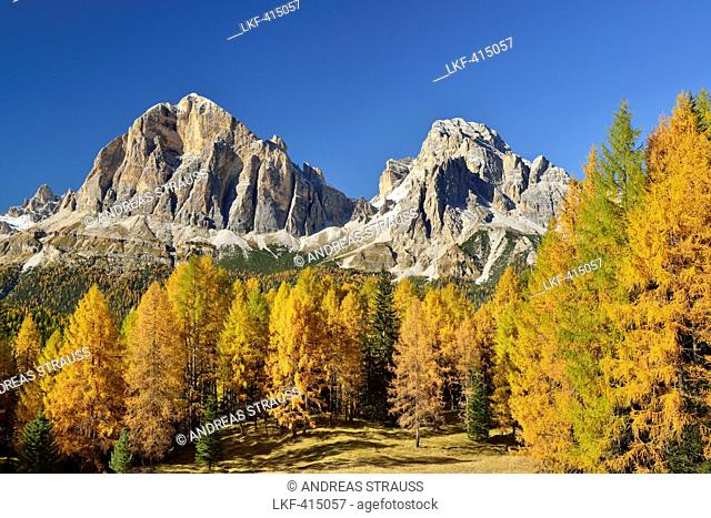Tofana di Rozes and Tofana di Mezzo above larch trees in autumn colors, Cortina d?Ampezzo, Dolomites, UNESCO World Heritage Site Dolomites, Veneto, Italy
