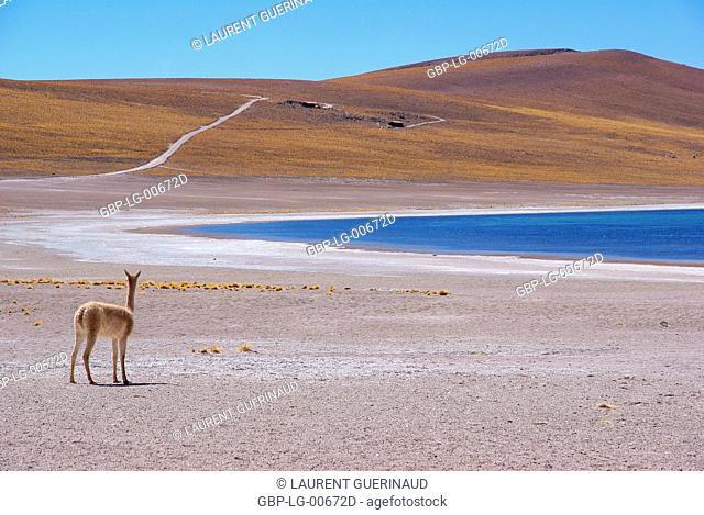 Laguna Miscanti, Los Flamencos Reserve National, Atacama Desert, Region de Antofagasta, Santiago, Chile