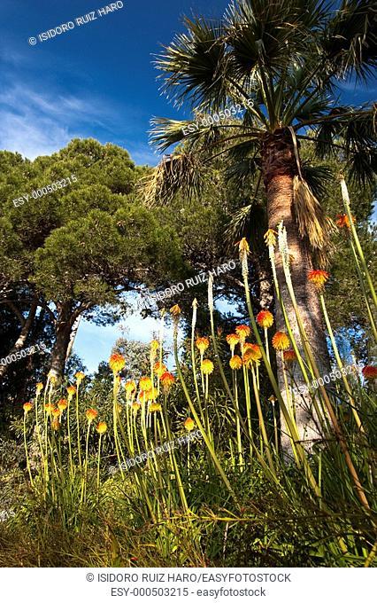 Jardin Botánico Marimurtra  Blanes Costa Brava  Girona  Catalunya  España