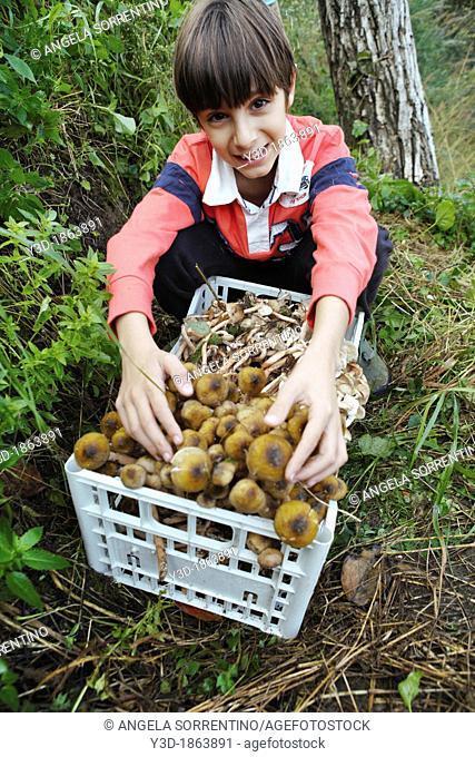 happy child picking mushrooms Armillaria Mellea in countryside of Pozzuoli, Campania, Italy