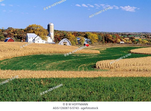 Agriculture - Farmstead in mid Autumn, alfalfa is ready for another cutting & corn is ready for harvest, Sequence Photo 8 / Wisconsin, USA