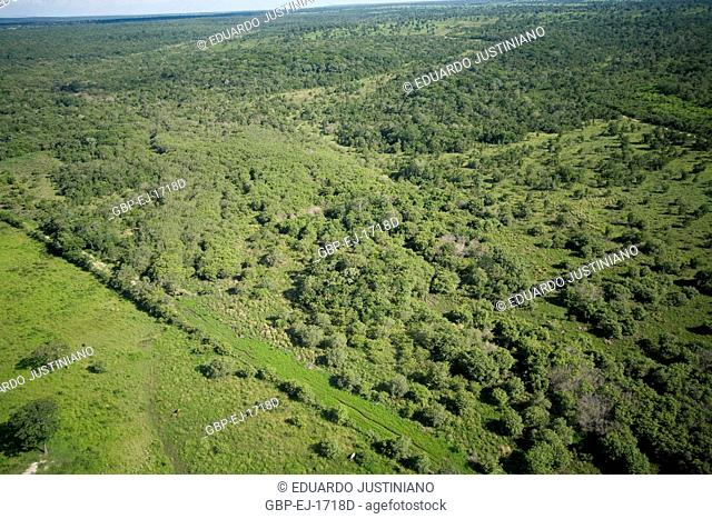Mosaic with Field and Forest, Aquidauana, Mato Grosso do Sul, Brazil