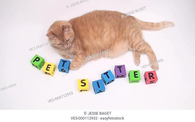 cat with alphabet blocks spelling out pet sitter