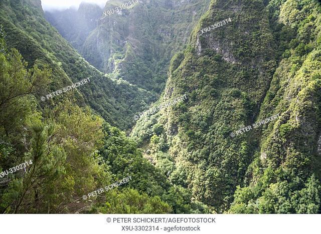 gorge at the hiking trail Levada do Caldeirao Verde, Queimadas Forestry Park, Madeira, Portugal, Europe