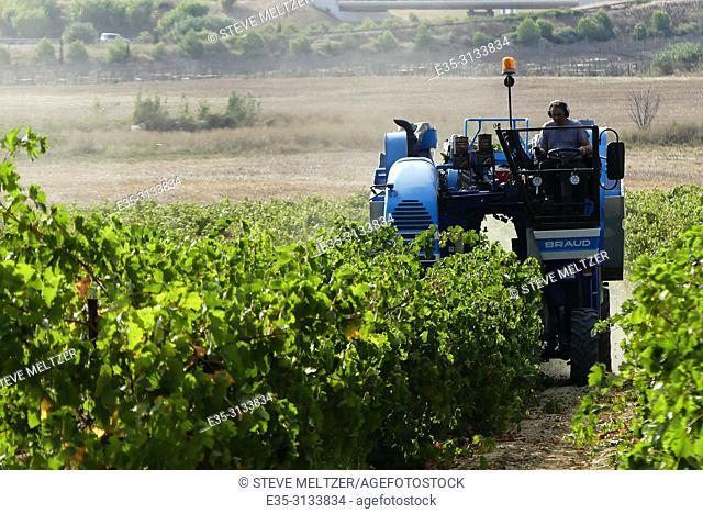 Harvesting wine grapes - la vendage - with a modern mechanical harvester. Tourbes, France