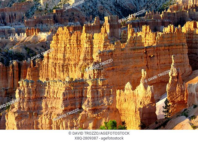 Sunrise and scenic views of the Amphitheater, Bryce Canyon National Park, located Utah, in the Southwestern United States