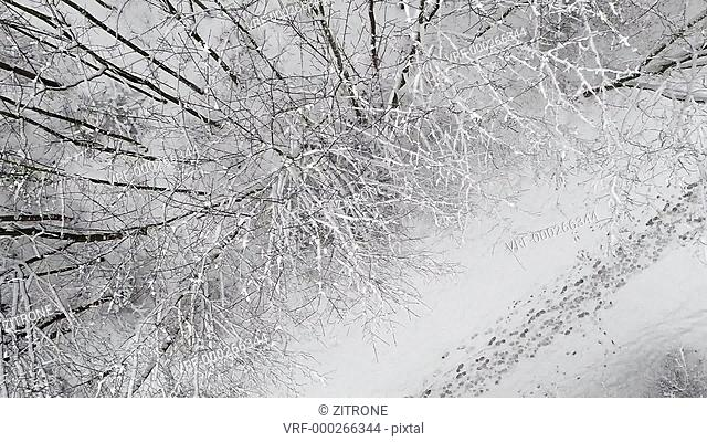 Directly above shot of person with sleigh walking amidst snow covered trees