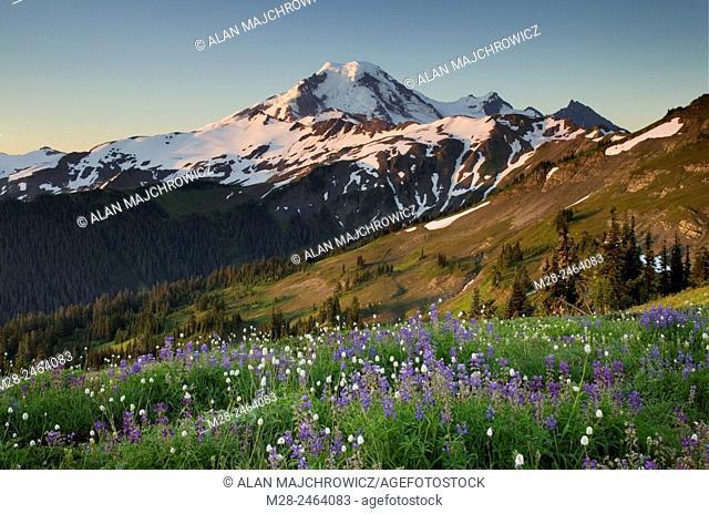 Mount Baker, seen from wildflower meadows on Skyline Divide, Mount Baker Wilderness Washington