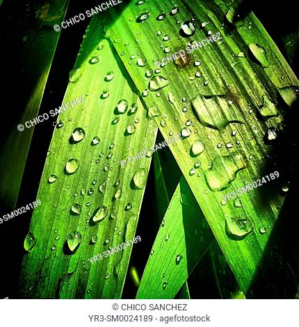 Raindrops cover a green plant in Prado del Rey, Sierra de Grazalema, Andalusia, Spain