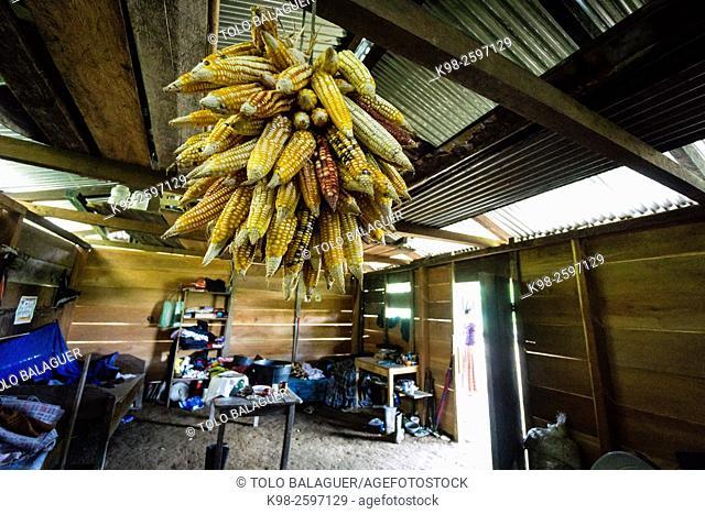 reservas de mazorcas de maiz, Lancetillo, La Parroquia, zona Reyna, Quiche, Guatemala, Central America