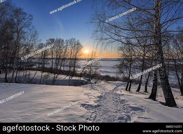 Birch trees and setting sun on the edge of a winter forest