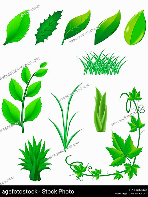 icon set of green leaves and plants for design vector illustration