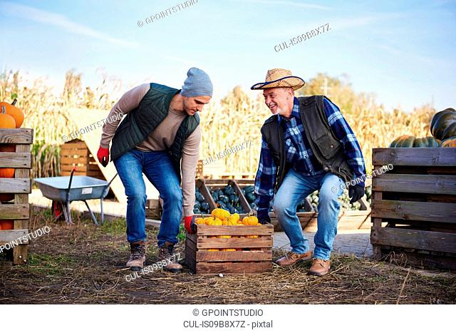 Farmers carrying crate of pumpkins