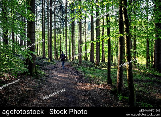 Germany, Bavaria, Egling, Male hiker walking along forest footpath