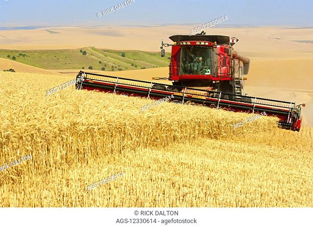 A Combine Harvesting Wheat On The Hills In The Palouse Region Of Eastern Washington; Washington, United States Of America