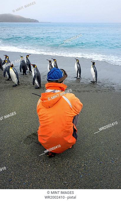 Person taking pictures of a group of King Penguins on a beach in South Georgia
