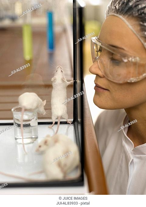 Female scientist looking at laboratory mice in tank