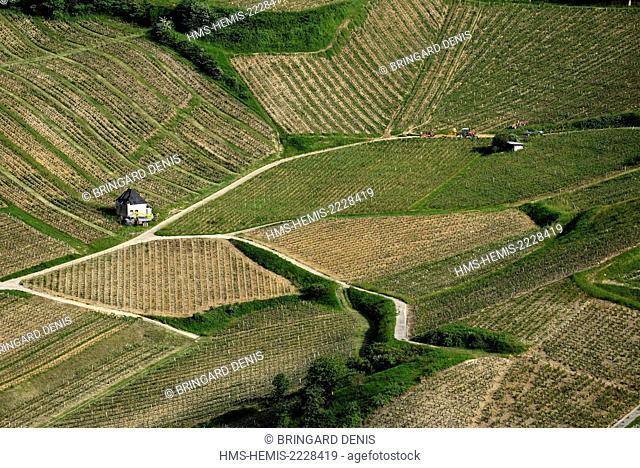 France, Jura, Chateau Chalon, labelled Les Plus Beaux Villages de France(The Most Beautiful Villages of France),Grand Court viewpoint, vineyard