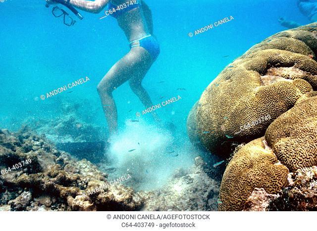 Tourists. Coral reef. Los Roques Archipelago. Caribbean Sea. Venezuela