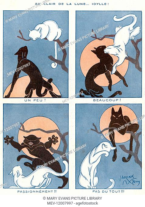 A black cat demonstrates a cunning way to remove a white cat off of a tall branch and place himself there instead