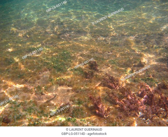 Underwater pictures, Ilha Grande, Rio de Janeiro, Brazil