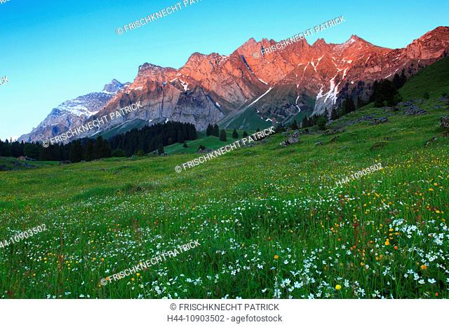 Alp, alps, flora, afterglow, Alpstein, area, massif, Appenzell, view, mountain, mountain panorama, mountain flowers, mountains, mountain flora, mountain spring