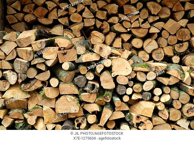 forefront of oak and beech wood piles