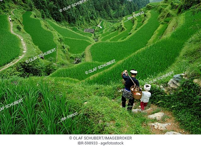 Dong woman and child, minority people, working in rice paddy, Tang An, Guizhou, Southern China, China, Asia