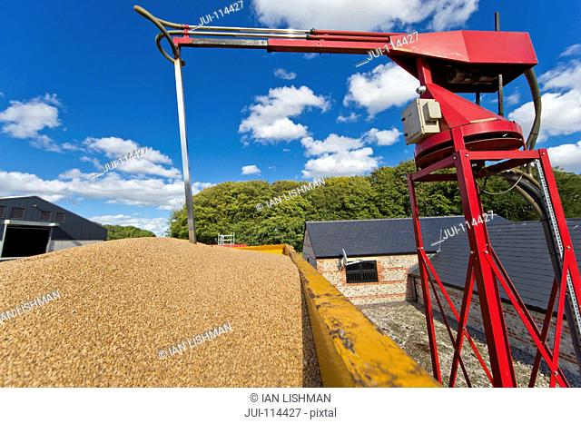 Probe Measuring Moisture Content Of Wheat Grain In Trailer