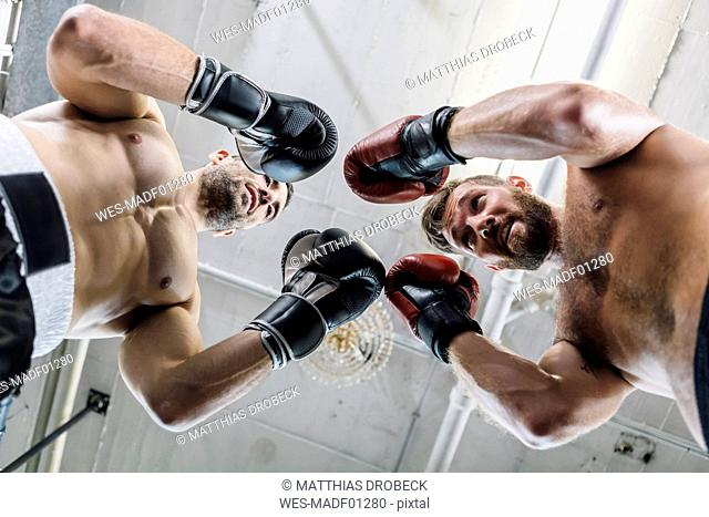 Low angle view of two boxers