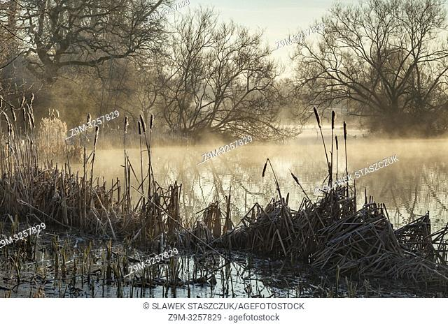 Winter sunrise on a small lake in the West Sussex countryside, England