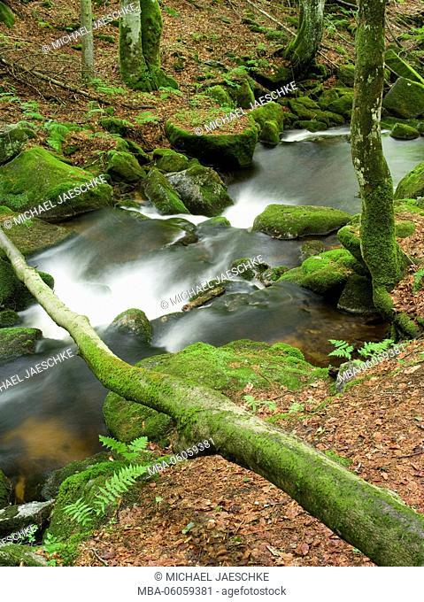 Kleine Ohe river, Bavarian Forest National Park