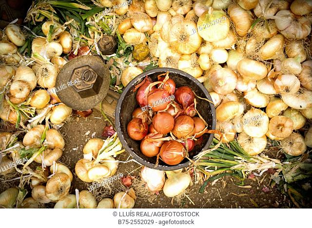 Close-up of ecological onions, an old scales and a weight of 2 kilos in the street market in Fez Medina, Morocco Africa