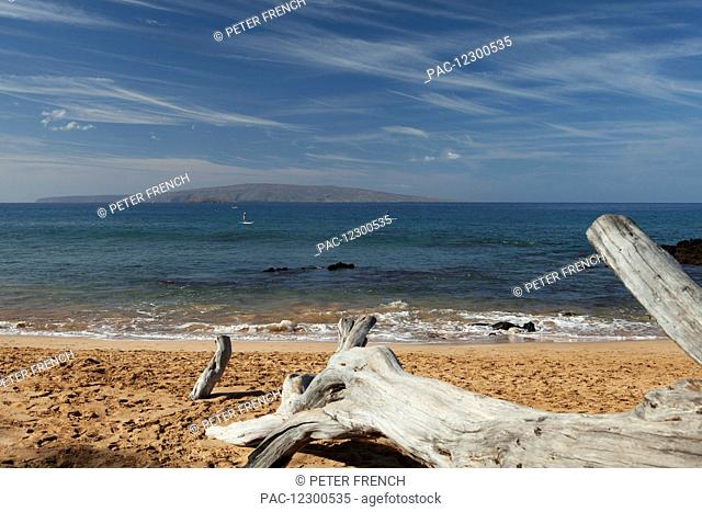 Driftwood on a sandy Mokapu beach, stand up paddle boarders, Molokina Isle and Kahoolawe Isle; Kihei, Maui, Hawaii, United States of America