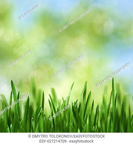 Beauty seasonal landscape with green growing grass and natural bokeh