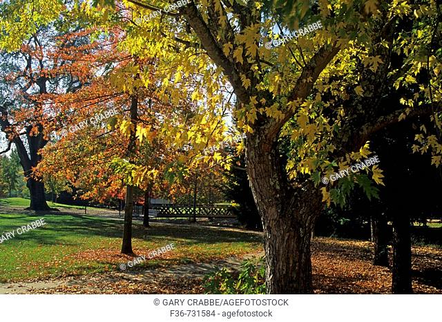 Kenwood Plaza Park in Fall, Valley of the Moon, Sonoma County, California