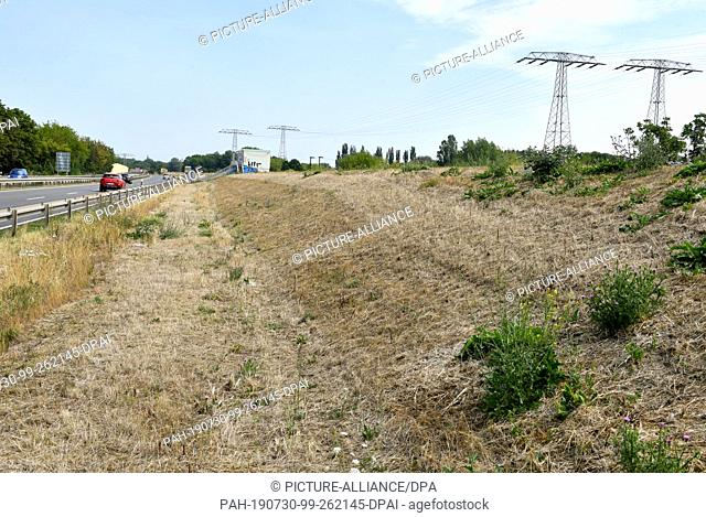 28 July 2019, Saxony-Anhalt, Halle: The planting on the Gimritzer dam on the B80 road has dried up after a long drought. The dam is intended to protect...