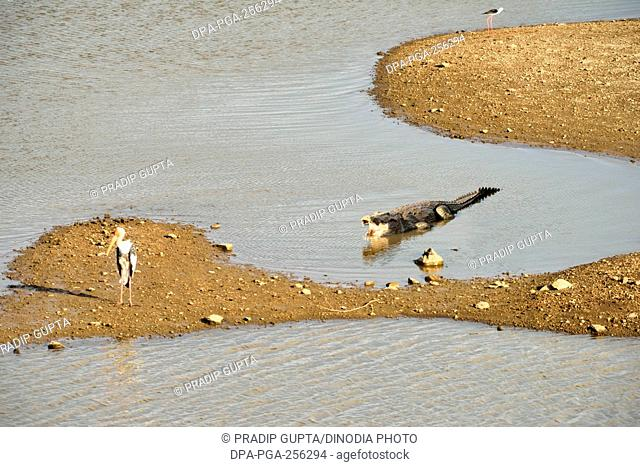 Crocodile, gir national park, Gujarat, india, asia
