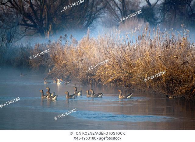 wildlife in natural park 'de biesbosch' in Holland